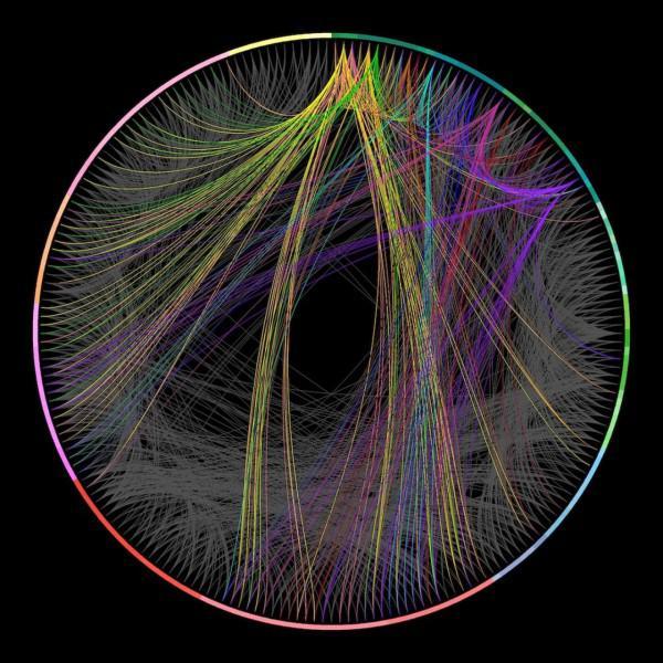 Bildergalerie: Kartierung des Gehirns