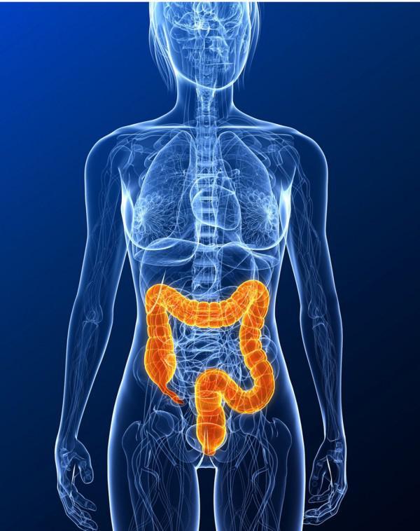 11 überraschende Fakten über das Verdauungssystem