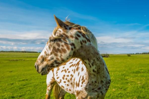 pferderassen mit bild und name
