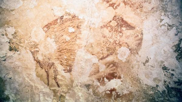 höhle die durch 2 kinder entdeckt wurden