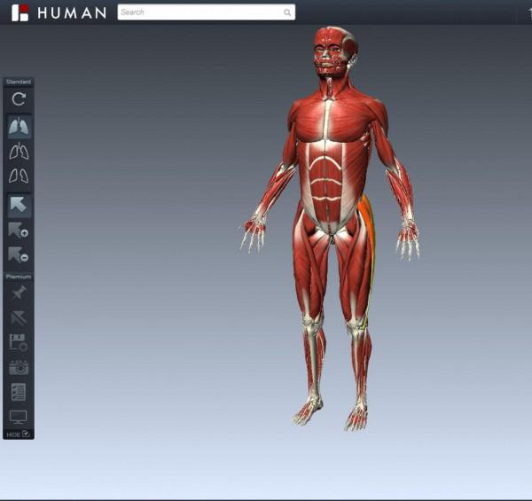 11 überraschende Fakten über das Skelettsystem