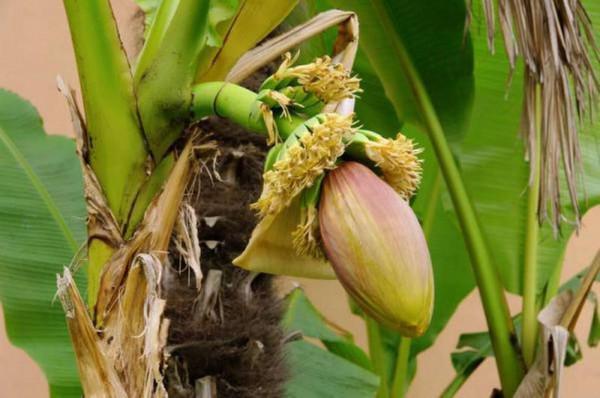 bekämpfung invasive arten