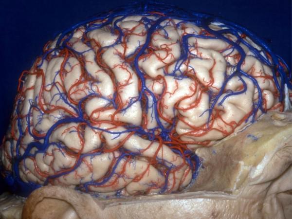 3D-Bilder: Erforschung des menschlichen Gehirns