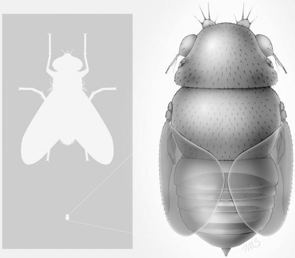 Termiten Im Haus: Fliegende Ameisen Thailand