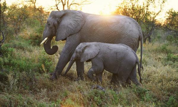 Tiere töten sieben Menschen in sieben Wochen, sagt Malawi Wildpark