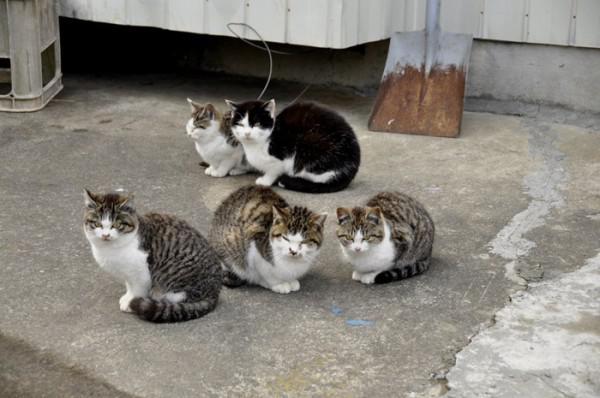 viele katze in japan