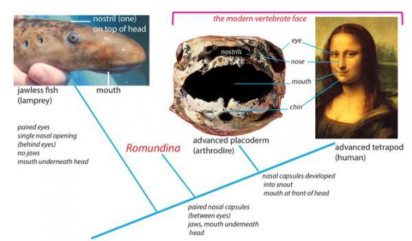 Hallo Fisch Gesicht – ein fossiler Fisch zeigt die Ursprünge des ...