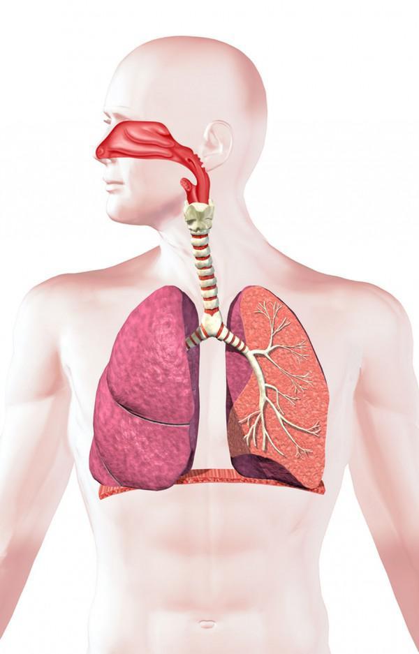Keuchen! 11 überraschende Fakten über das respiratorische System