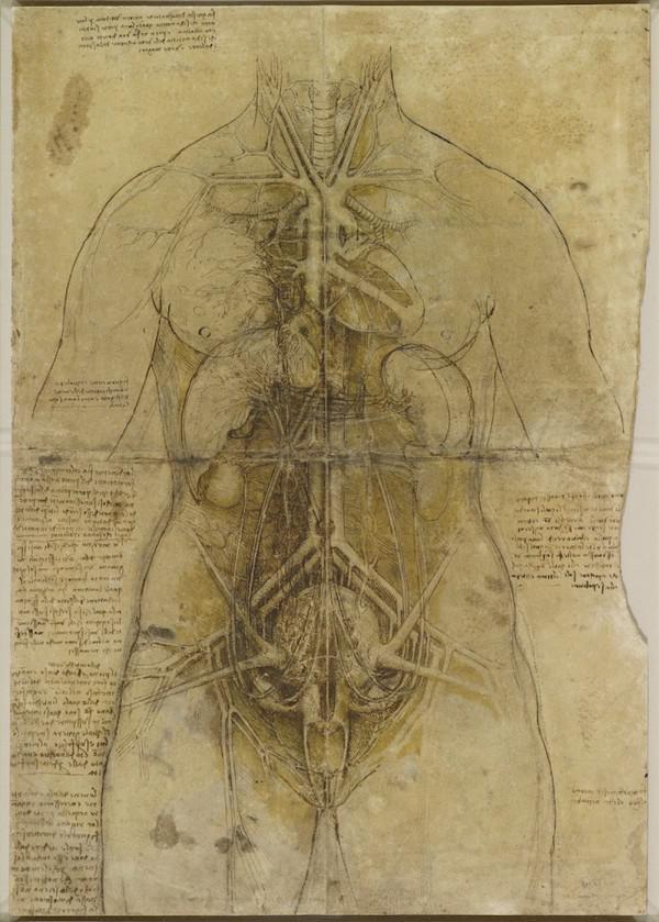 Anatomie trifft Kunst: Da Vincis Zeichnungen
