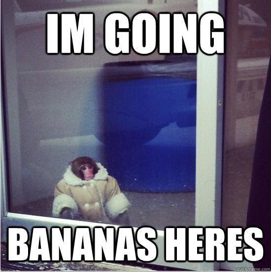 12 Der Besten Ikea Monkey Meme