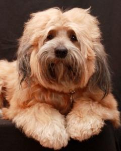 elektrolyte selber machen hund