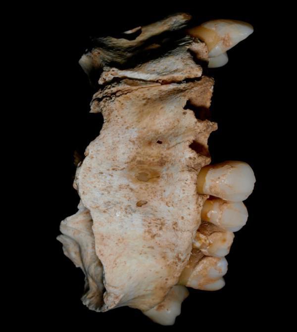kleopatra grab gefunden