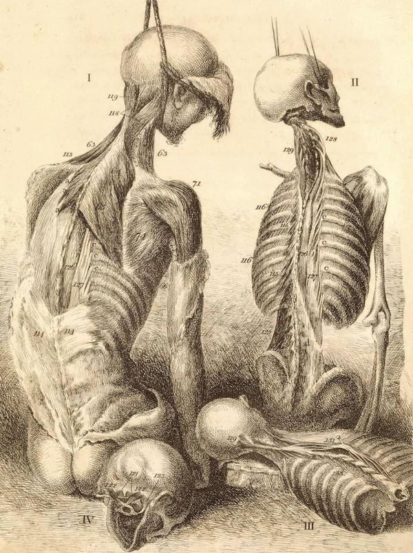 Bildergalerie: Die Merkwürdigkeiten der menschlichen Anatomie