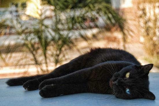 24 schön gruselige schwarze Katzen