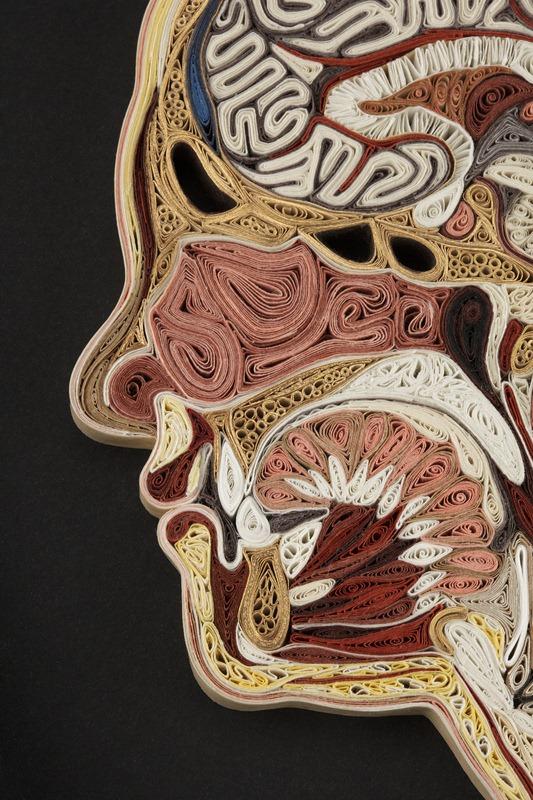 Atemberaubende anatomische Querschnitte von Lisa Nilsson aus Papier ...