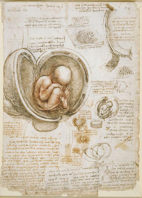 Menschlichen Körper Teil, dass ratlos Leonardo da Vinci Revealed