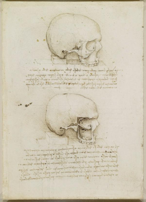 Schädel Modell zeigt Artistik, aber ist es ein Leonardo da Vinci?